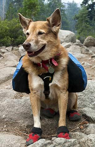 Hund mit Schuhen im Gebirge