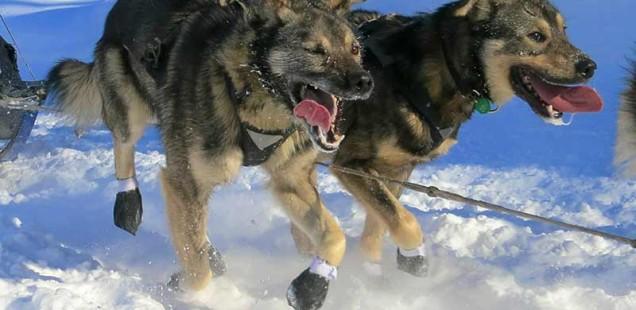 schuhe für hunde im winter